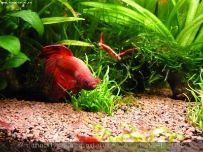 Мой аквариум 20 литров momnasty  - P1000875.JPG