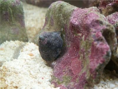 Решился на морской аквариум 30 литров Indi  - 21c0476059dc.jpg