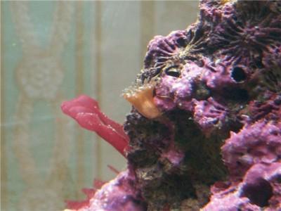 Решился на морской аквариум 30 литров Indi  - f9c514e1a1eb.jpg