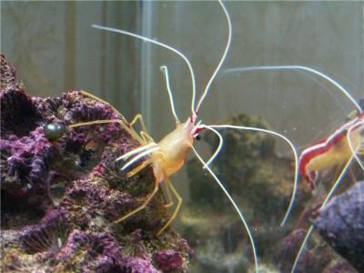 Решился на морской аквариум 30 литров Indi  - fe7bb2eed0a2.jpg