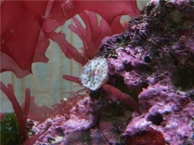 Решился на морской аквариум 30 литров Indi  - 269278b69e93.jpg