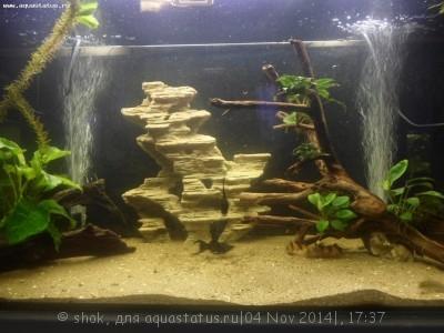 Мой аквариум 300 литров shok  - SAM_1076.JPG