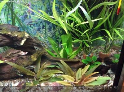 Опознание аквариумных растений - image.jpg