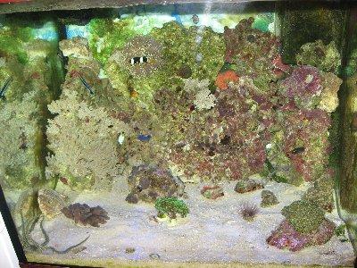 Мой морской аквариум 250 литров Сергей  - Изображение 024.jpg