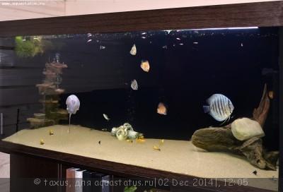 Протока для аквариума - _DSC0009 (2).JPG