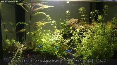 Светодиодное освещение аквариума - DSC_0012.JPG