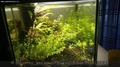 Светодиодное освещение аквариума - DSC_0017.JPG