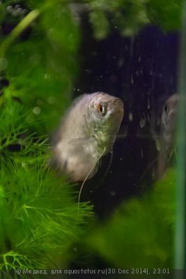 Мой первый аквариум 15 литров Медвед  - IMG_3535.jpg
