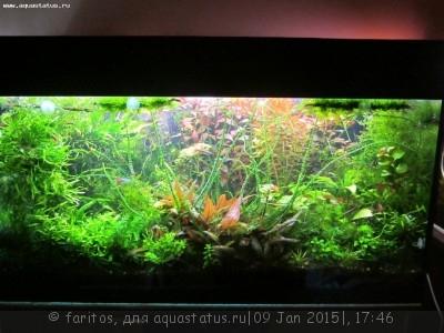 Фото аквариумов объемом от 101 до 250 литров - огород 200.jpg