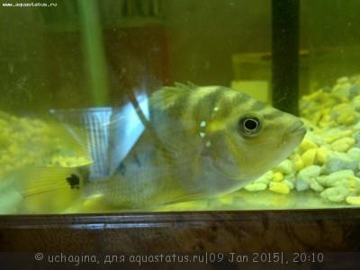 Помогите опознать рыбку опознание рыб  - 2015-01-09-2548.jpg