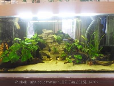Мой аквариум 300 литров shok  - SAM_1756.JPG