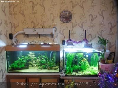 Мой аквариум 300 литров shok  - DSCN1171.JPG