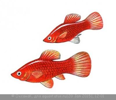 Помогите опознать рыбку опознание рыб  - 1000209_PH07625.jpg