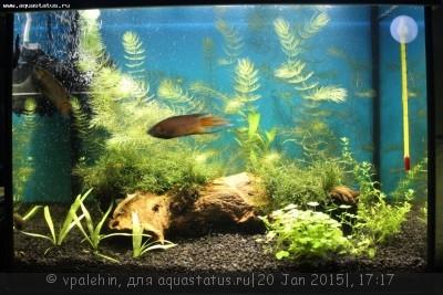 Светодиодное освещение аквариума - no.jpg