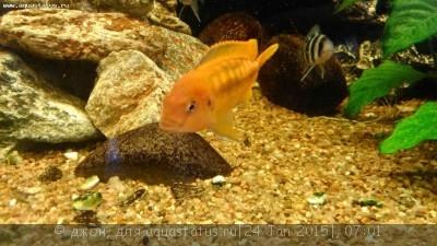 Помогите опознать рыбку опознание рыб  - мелан3.jpg