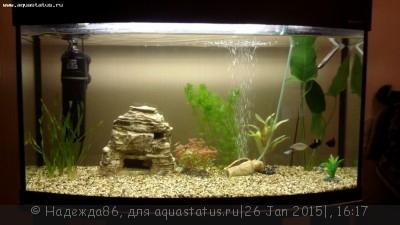 Фото аквариумов объемом от 101 до 250 литров - 20150125_201803.jpg
