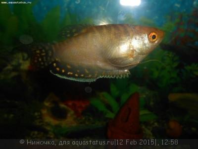 Помогите опознать рыбку опознание рыб  - DSCN4785.JPG