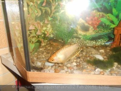 Помогите опознать рыбку опознание рыб  - DSCN4789.JPG