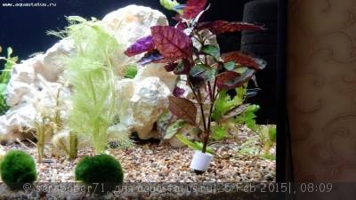 Аквариумные растения - опознание растений. - DSCN0268.JPG