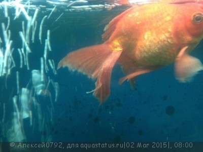 Заболели почти все обитатели аквариума - image.jpg