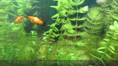 Помогите опознать рыбку опознание рыб  - IMG_7329.JPG