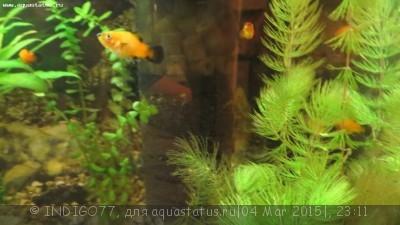 Помогите опознать рыбку опознание рыб  - IMG_7331.JPG