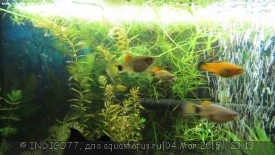 Помогите опознать рыбку опознание рыб  - IMG_7341.JPG
