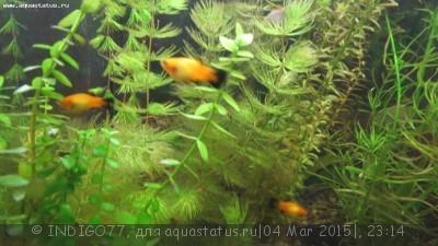 Помогите опознать рыбку опознание рыб  - IMG_7345.JPG