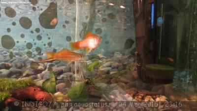 Помогите опознать рыбку опознание рыб  - IMG_7343.JPG