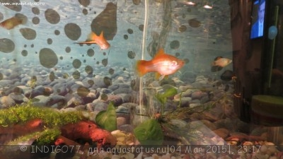Помогите опознать рыбку опознание рыб  - IMG_7342.JPG