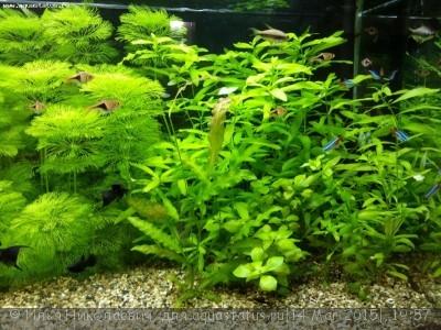 Фото аквариумов объемом от 101 до 250 литров - HkzOdPEu3cc.jpg