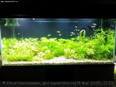 Фото аквариумов объемом от 101 до 250 литров - iH_mwY9nwdQ.jpg