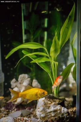 Опознание аквариумных растений - WnOYyasnK-Y.jpg