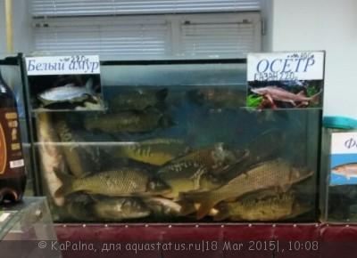 Выбор внутреннего фильтра для аквариума. Какой выбрать внутренний фильтр? - image.jpg