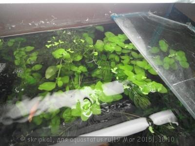 Аквариумные растения - опознание растений. - yCOSzhb3TUw.jpg