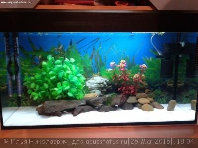 Фото аквариумов объемом от 101 до 250 литров - 20130619_232649.jpg