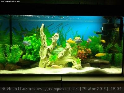 Фото аквариумов объемом от 101 до 250 литров - 20140513_233117.jpg
