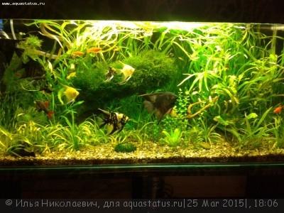 Фото аквариумов объемом от 101 до 250 литров - 20140625_201739.jpg