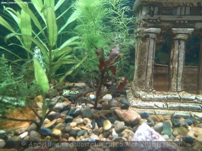 Светодиодное освещение аквариума - IMG_20150323_204237_901.jpg