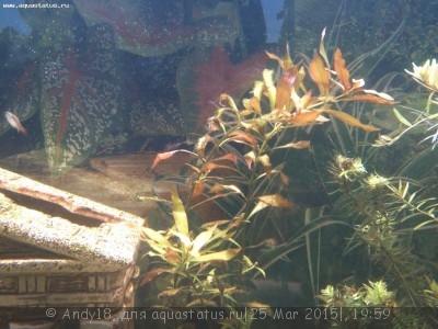 Светодиодное освещение аквариума - IMG_20150323_204250_383.jpg