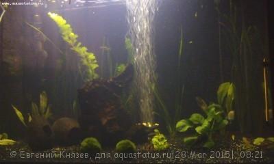 Мутная вода в аквариуме, муть в аквариуме - 1427520087777220656960.jpg