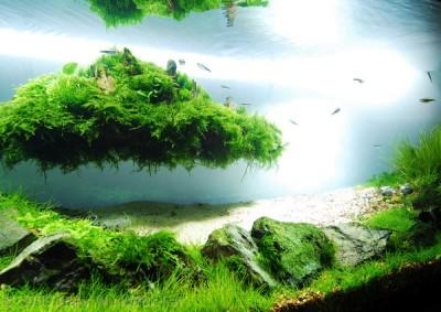 Интересные аквариумы со всего мира - 365.jpg