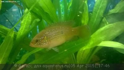 Помогите опознать рыбку опознание рыб  - WP_20150401_18_27_46_Pro[2].jpg