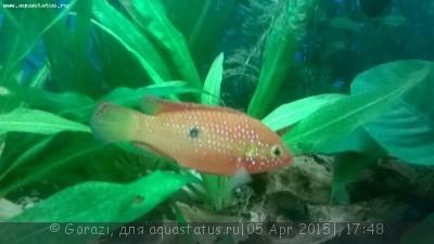 Помогите опознать рыбку опознание рыб  - WP_20150405_17_28_47_Pro[2].jpg
