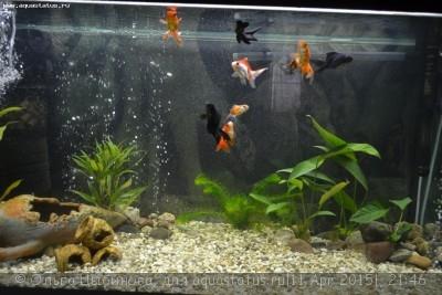 Мутная вода в аквариуме, муть в аквариуме - DSC_6980.JPG