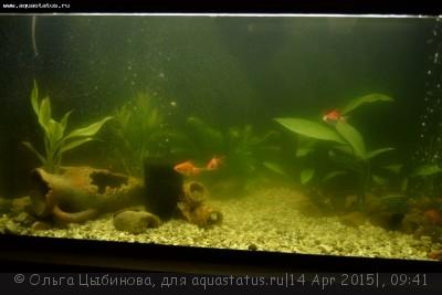 Мутная вода в аквариуме, муть в аквариуме - DSC_7004.JPG