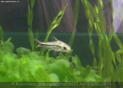 Мой нано-аквариум 30 литров kaiassowa  - image.jpg