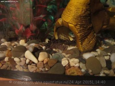 Помогите опознать рыбку опознание рыб  - IMG_2833.JPG