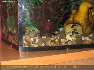 Помогите опознать рыбку опознание рыб  - IMG_2861.JPG