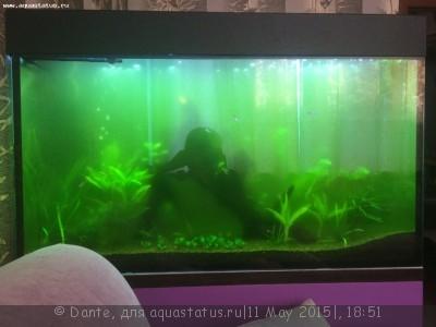 Цветение воды, зеленая вода, позеленела аквариум - tNk_e65FsYk.jpg